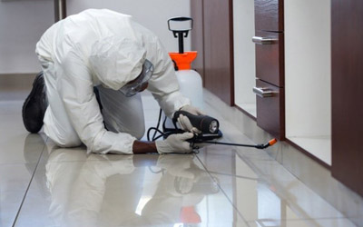 5-pest-control-mistakes-must-stop-right-now
