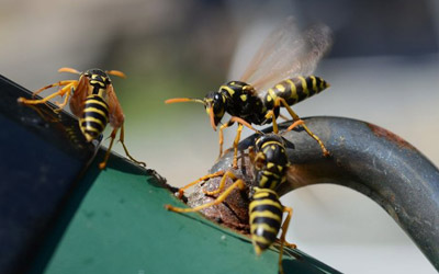 Some Proven Tips To Keep Wasps Away From A Property